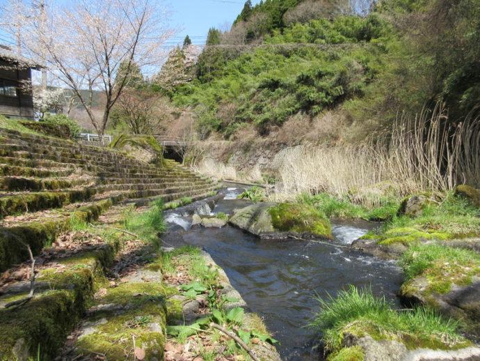最近、花合野川沿いに蛍が出ています。羽織り物を一枚まとってお出かけになりませんか?